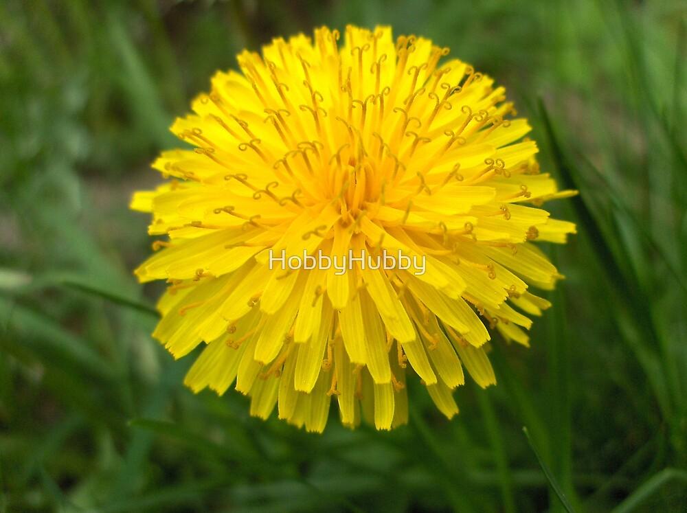 Dandelion by HobbyHubby