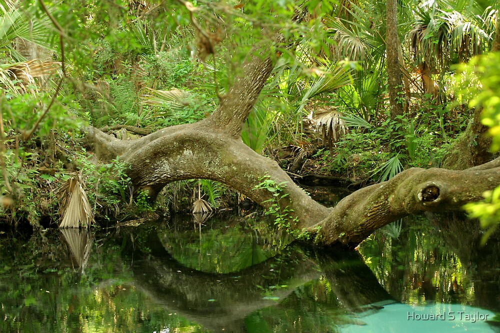 JUNIPER SPRINGS 2 by H & B Wildlife  Nature Photography