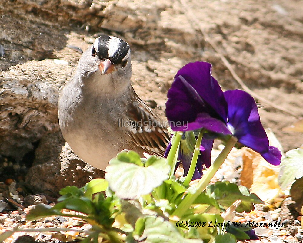 Flower and a bird by lloydsjourney