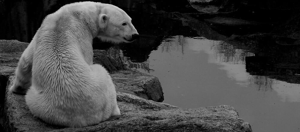Polar Bear by worthy87