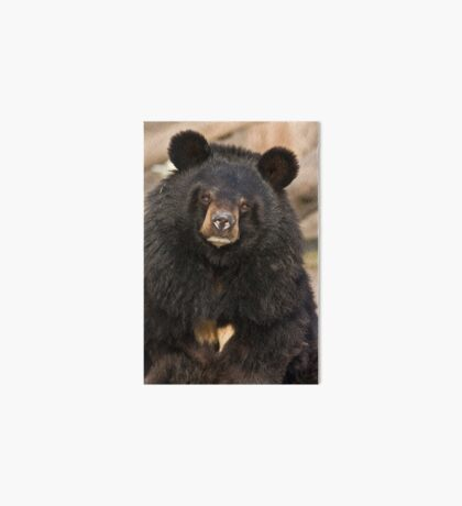Asian Black Bear Art Board