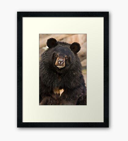 Asian Black Bear Framed Print
