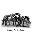 Three Zebras in a Row by jacqi