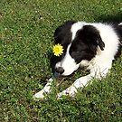 There's A Flower In My Eye by Glenna Walker