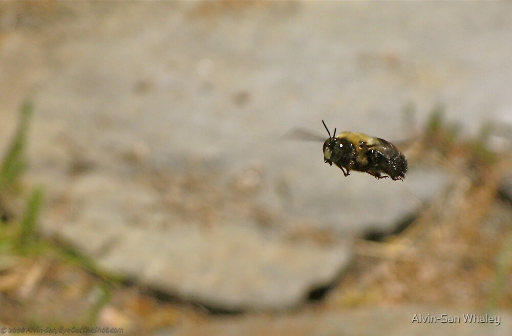 Bumblebee FlyBy by Alvin-San Whaley