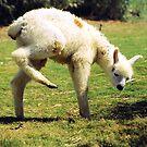 Baby Lama by Abdel Soudan