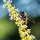 Bumble Bee by BrianDawson
