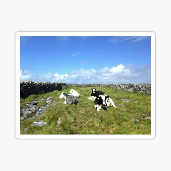 Cows on Inisheer Sticker