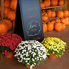 Pumpkins and Mums for Sale       ^ by ctheworld