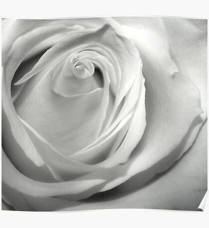Fresh Rose Poster