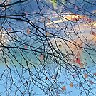 Branches, Leaves and Water by John Butler