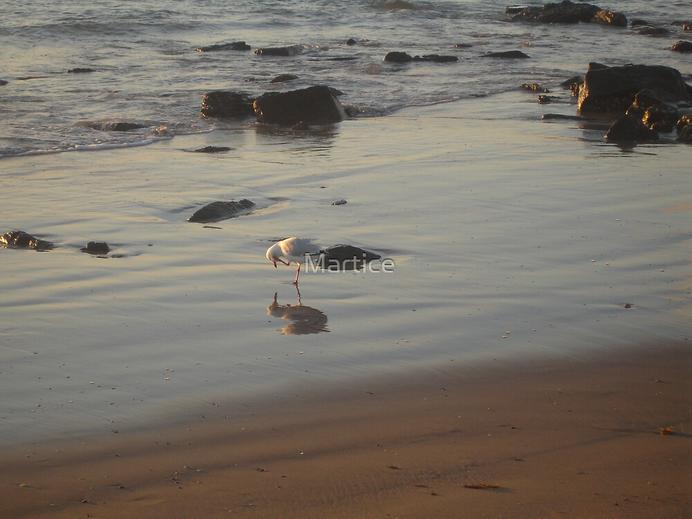 Seagull Reflections by Martice