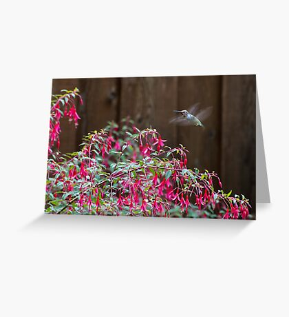 Hovering Greeting Card