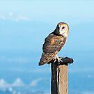Barn Owl by Michael Wolf
