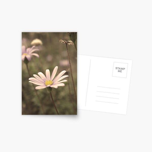 Just Pretty Postcard