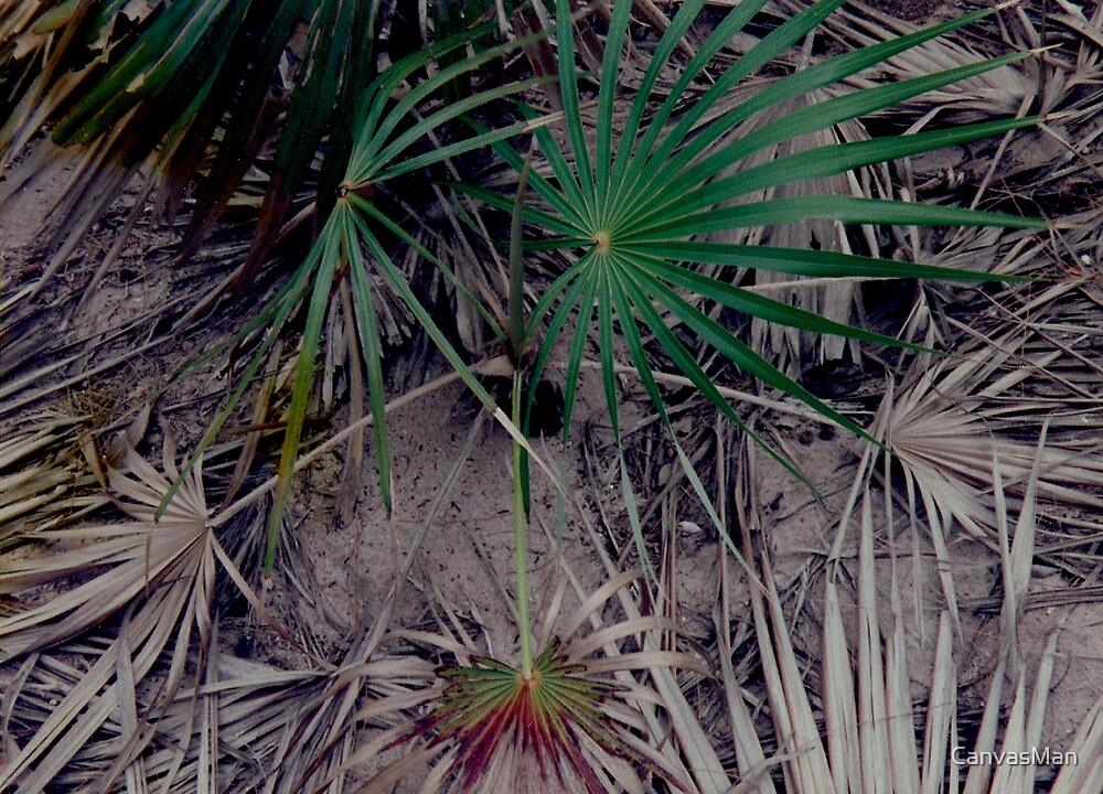 'Palms Renew' by CanvasMan