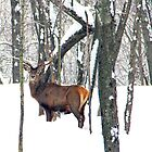 Deer In The Snow by vette