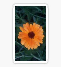 Calendula Flower Sticker