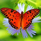 Passion Butterfly by Cynthia48