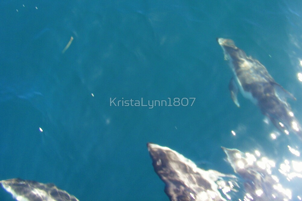 White Sided Dolphins @ Monterey California by KristaLynn1807