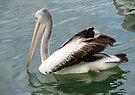 The Pelican by yolanda