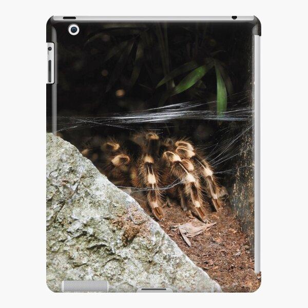 Acanthoscurria geniculata iPad Snap Case