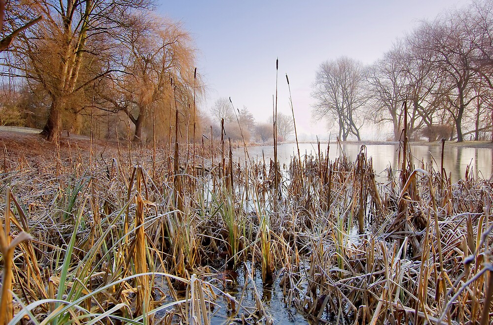 On Frozen Pond by Andrew Leighton