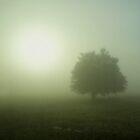 Tree in Fog by azbulutlu
