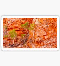 Growing Through the Cracks - Ormiston Gorge, Northern Territory Sticker