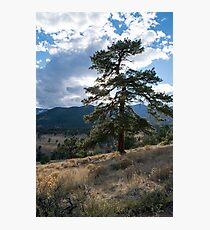 Pine-light Photographic Print