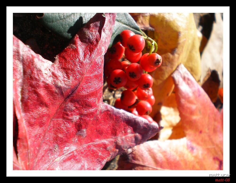 autumn leaves-2 by matt ucar