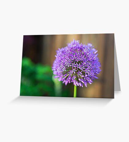 Allium Glow Greeting Card