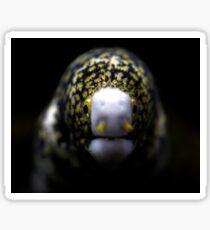 snowflake moray eel  Sticker