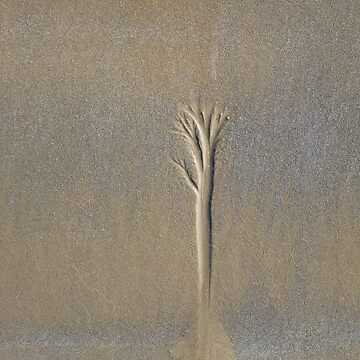 Sand Tree by Woodgate