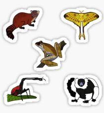 Madagascar Wildlife Mini Sticker Pack 1 Sticker