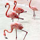 Pink Flamingos, Ocean by Southern  Departure