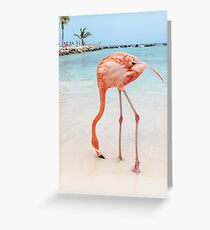 Pink Flamingo, Ocean Greeting Card
