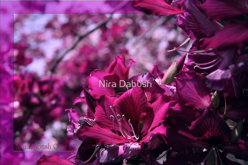 In Full Bloom by Nira Dabush