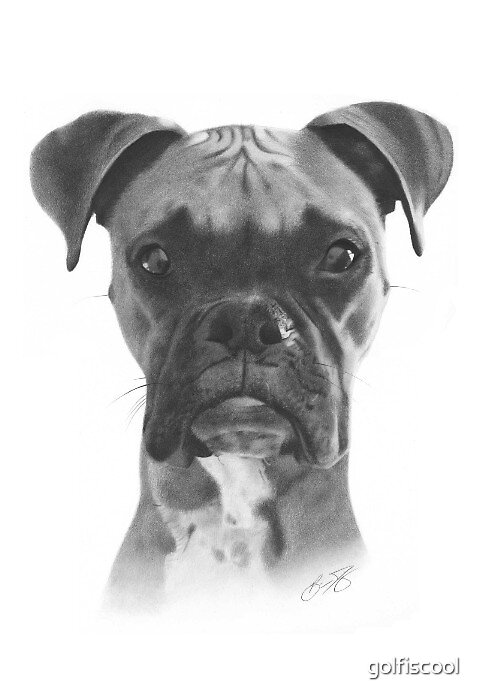 Dog Drawing by golfiscool