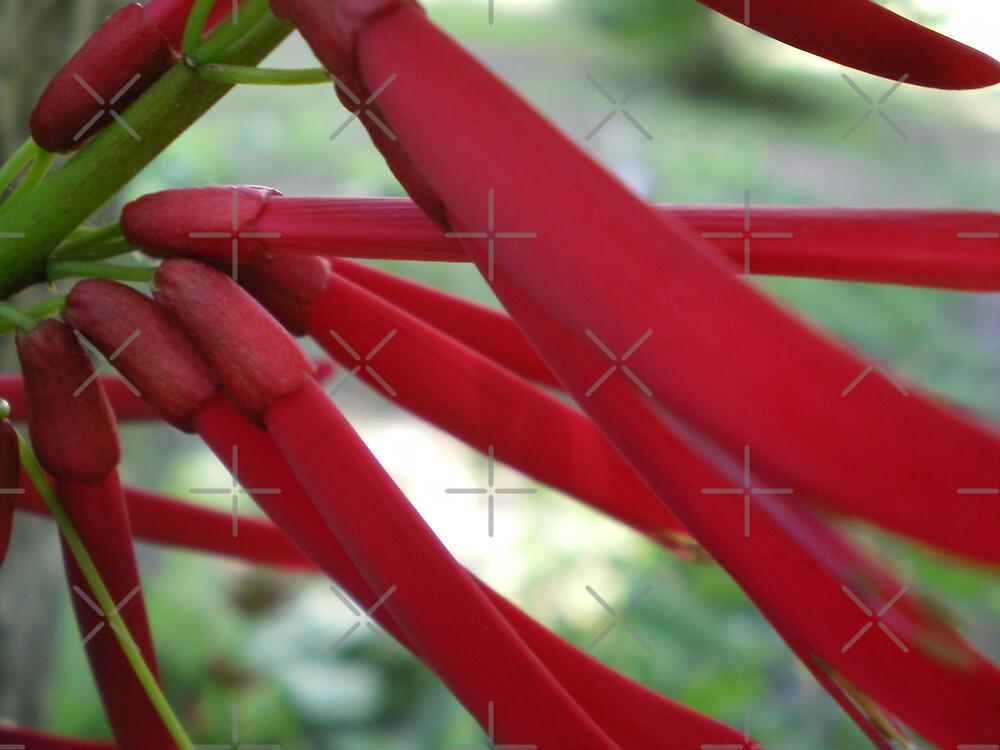 Ribbons of Red by Rebekah  McLeod
