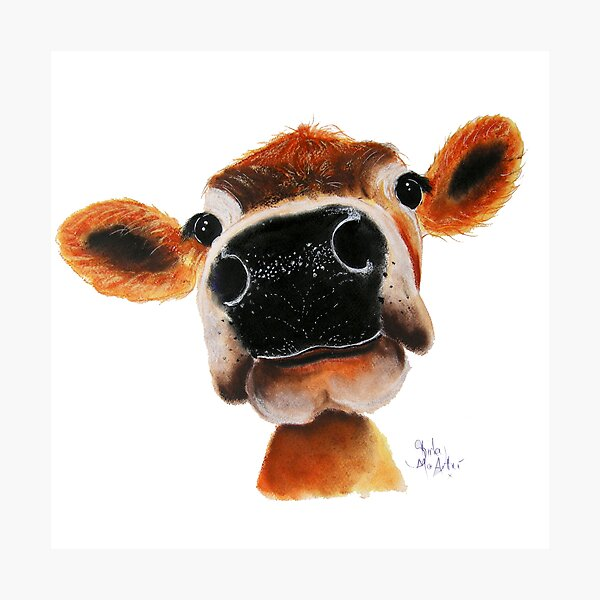 JERSEY CoW PRiNT ' JeRSeY JoY ' BY SHiRLeY MacARTHuR  Photographic Print