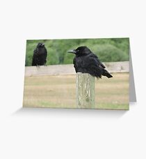 Feathered Shadows Greeting Card