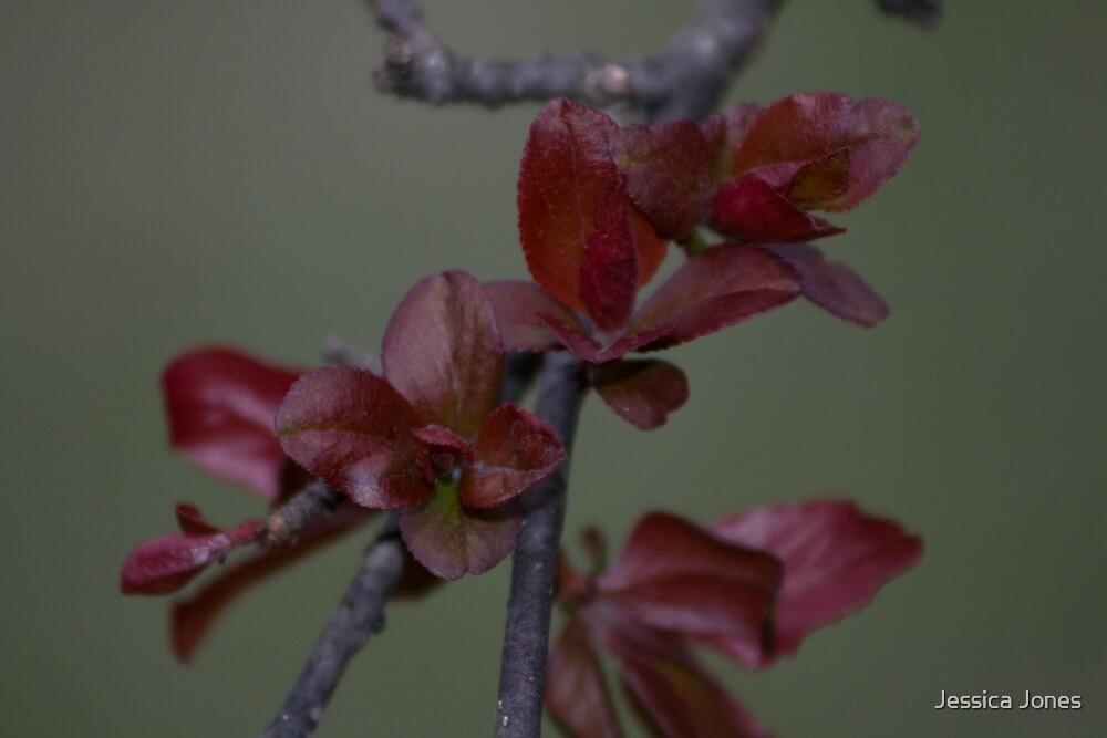 Leaves by Jessica Jones