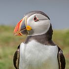 Puffin by peaky40