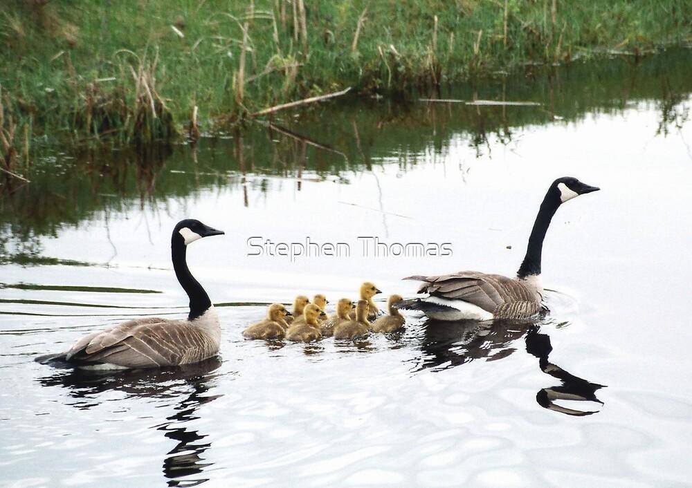 Proud Parents by Stephen Thomas