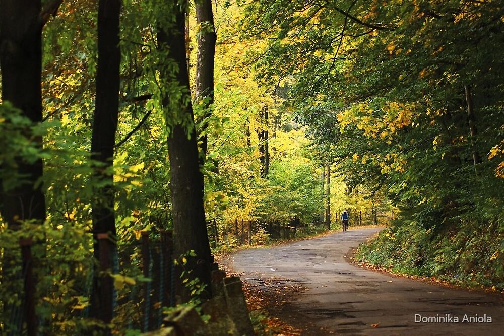 Autumn 16 by Dominika Aniola