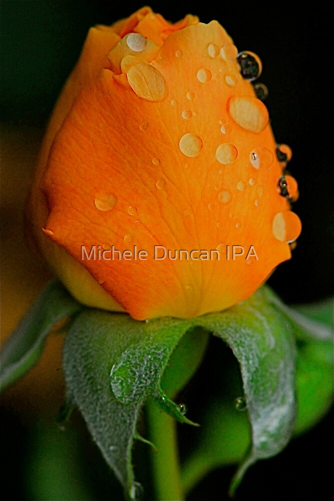 Poppin Peach by Michele Duncan IPA