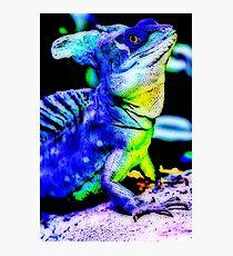 Iguana 1. Photographic Print