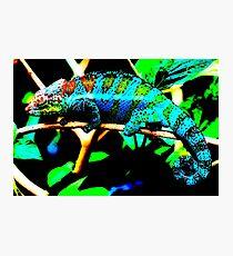 Iguana 2 Photographic Print