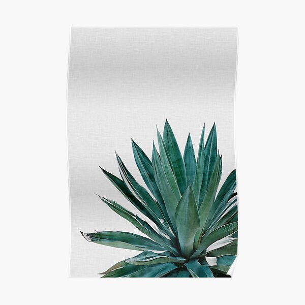 Agave Cactus Green Poster
